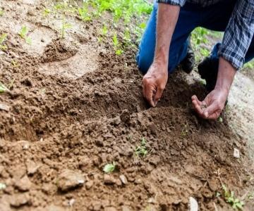 Agricultura / Pecuária / Silvicultura
